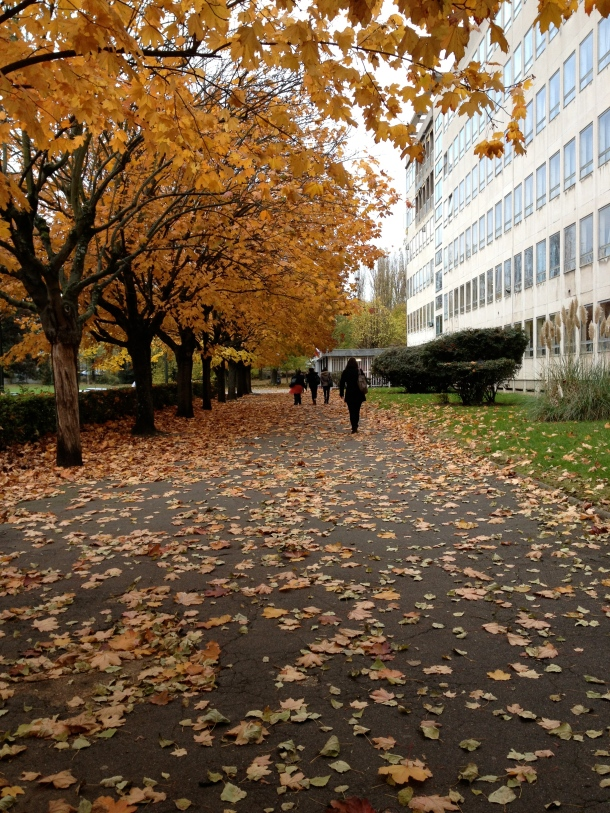 My building on the right, walking up the path on campus in the fall. Quite lovely!
