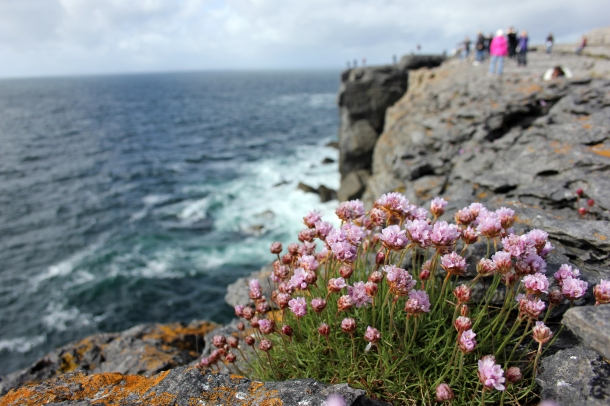 One last stop on some shorter seaside cliffs led to beautiful flower sightings--apparently they're only in bloom a short time every year!